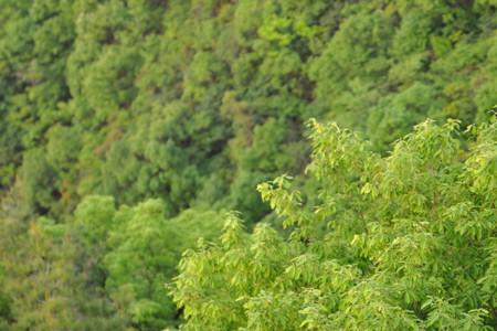 Sarubami_green