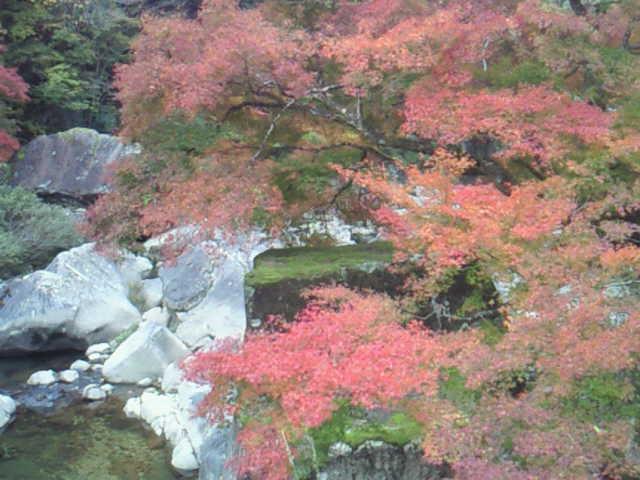只今の佐見川峡紅葉